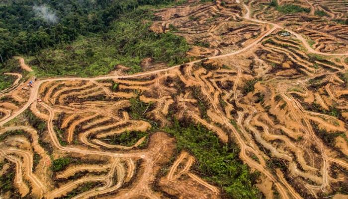 vue aerienne de la deforestation huile de palme sumatra indonesie ran. Black Bedroom Furniture Sets. Home Design Ideas